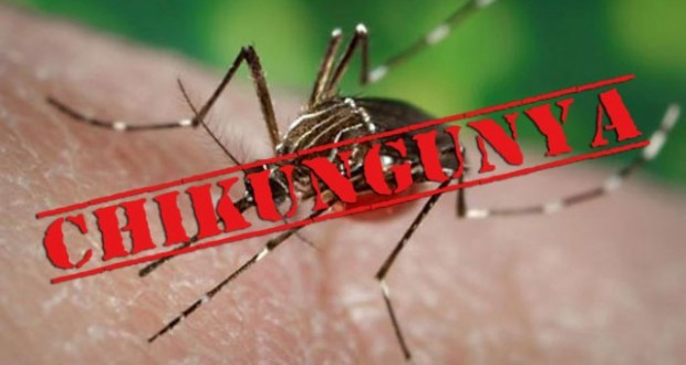 Chikungunya – What is it? How is differ from dengue